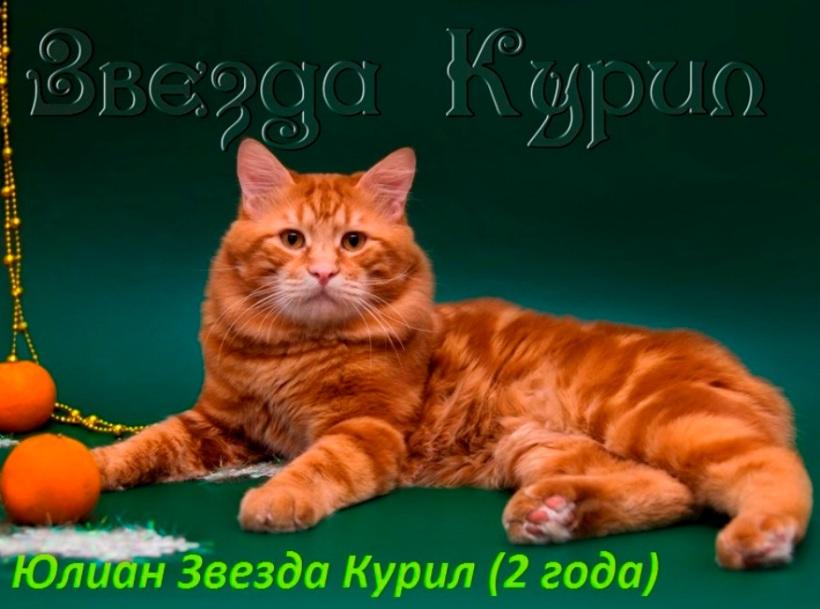 Юлиан ЗК